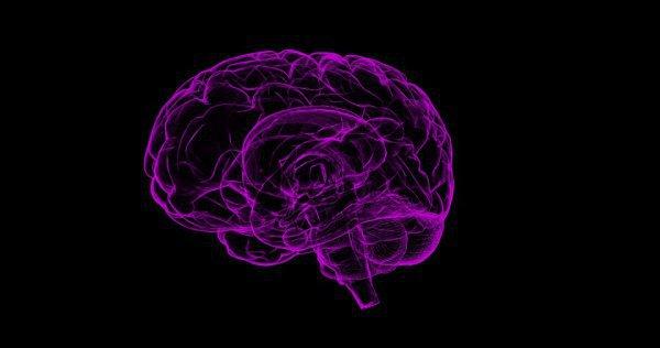 Пока ученые не знают, как ожирение содействует изменениям в мозге