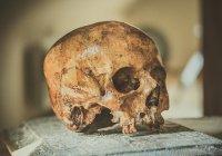 Древнейший в мире человеческий череп найден в Китае
