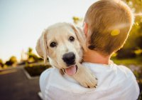 Стало известно, почему диабетикам нужно заводить собак