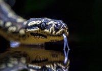 Змея, которая ждала встречи с Пророком (мир ему) целых шестьсот лет