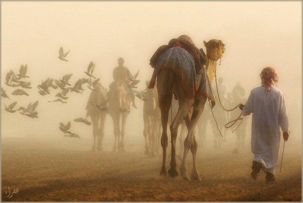 Знакомство Сурака и пророка Мухаммада (мир ему)