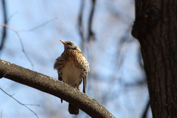 По причине заморозков после оттепели у птиц могут появиться проблемы с добыванием пищи