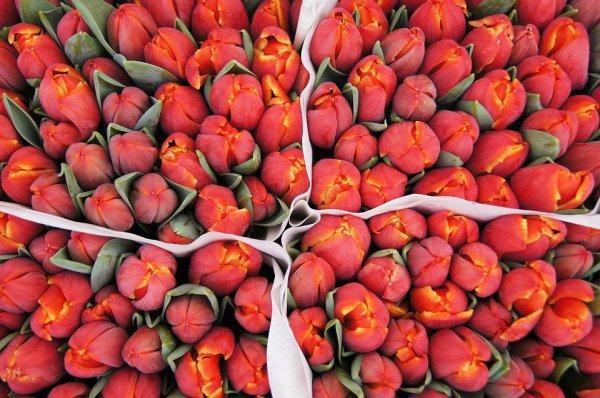 Любителей цветов пригласили собрать собственный букет на площади Дам в Амстердаме из 200 тыс. выставленных цветов