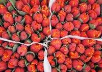 В Нидерландах бесплатно раздали 200 тыс. тюльпанов