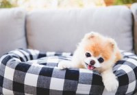«Самый милый пес в мире» умер из-за тоски по другу