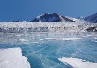 Таинственные мертвые организмы обнаружили в Антарктиде