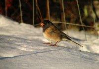 Орнитологи сообщили, чем в морозы кормить птиц