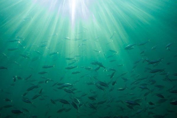 Сотни рыб морские биологи нашли в темных глубинах Калифорнийского залива, где почти отсутствует кислород