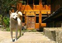 В Китае пес спас хозяина от смерти