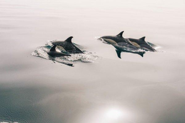 Самка дельфина получила серию глубочайших травм