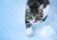 В Иркутской области ребенок спас кота, вмерзшего в лед (ВИДЕО)