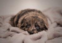 В Хакасии спасли щенков, выброшенных на рельсы