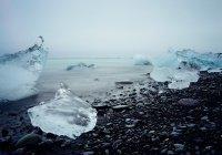 В Арктике заметили древние организмы