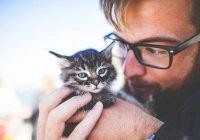 Обнаружена неожиданная опасность домашних кошек