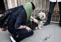 Жителям Тегерана запретили выгуливать собак