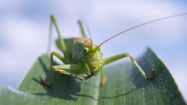 Организация объединенных наций обнародовала рекомендацию увеличить объем употребления в пищу насекомых