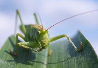 Ученые: питание насекомыми приведет к экологической катастрофе