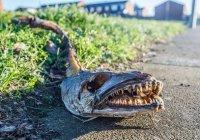Странное зубастое существо смутило жителей Ливерпуля