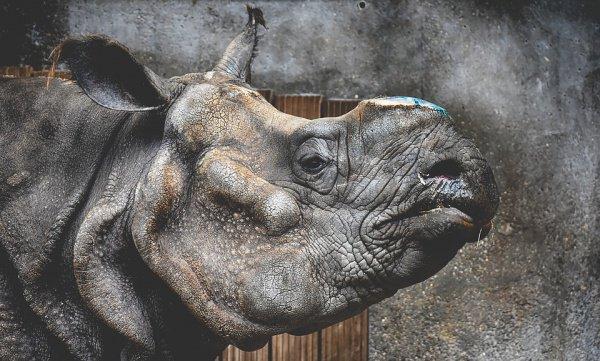 В результате 2 носорога прижали ребенка мордами к металлическим прутьям и удерживали, пока ее не вытащили работники зоопарка и родственники