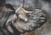 В США ребенок упал в клетку с носорогами и выжил