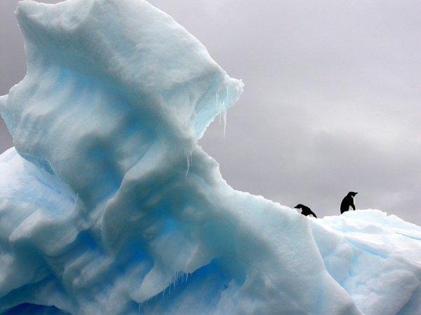 В случае частичного разрушения ледника Туэйтса уровень Мирового океана может повыситься на 30–40 см