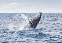 Серый кит подплыл вплотную к пляжу в Калифорнии (ВИДЕО)