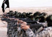 Пентагон: ИГИЛ может восстановиться в течение одного года