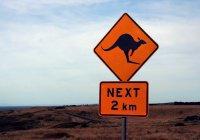 В Дании объявили в розыск кенгуру