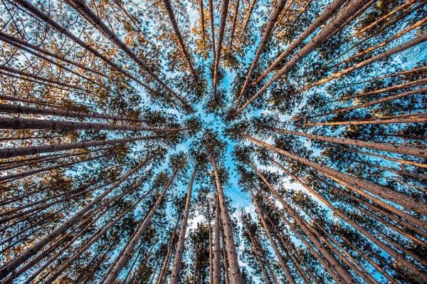 Высаживание деревьев принято считать далеким от эффективности способом замедления потепления