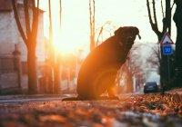 Сотрудник ДПС в Челябинске перекрыл дорогу из-за пса (ВИДЕО)