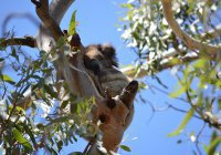 В Австралии нашли способ борьбы с парниковыми газами