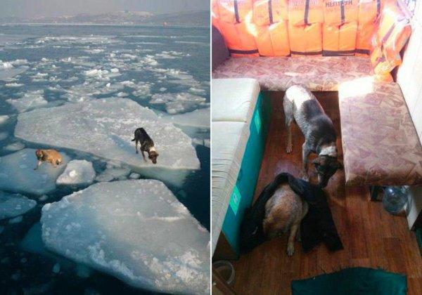 Теперь горожане благодарят моряков за спасение собак и ищут возможных хозяев для них в социальных сетях