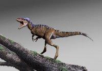 Ученые обнаружили тираннозавра размером с собаку